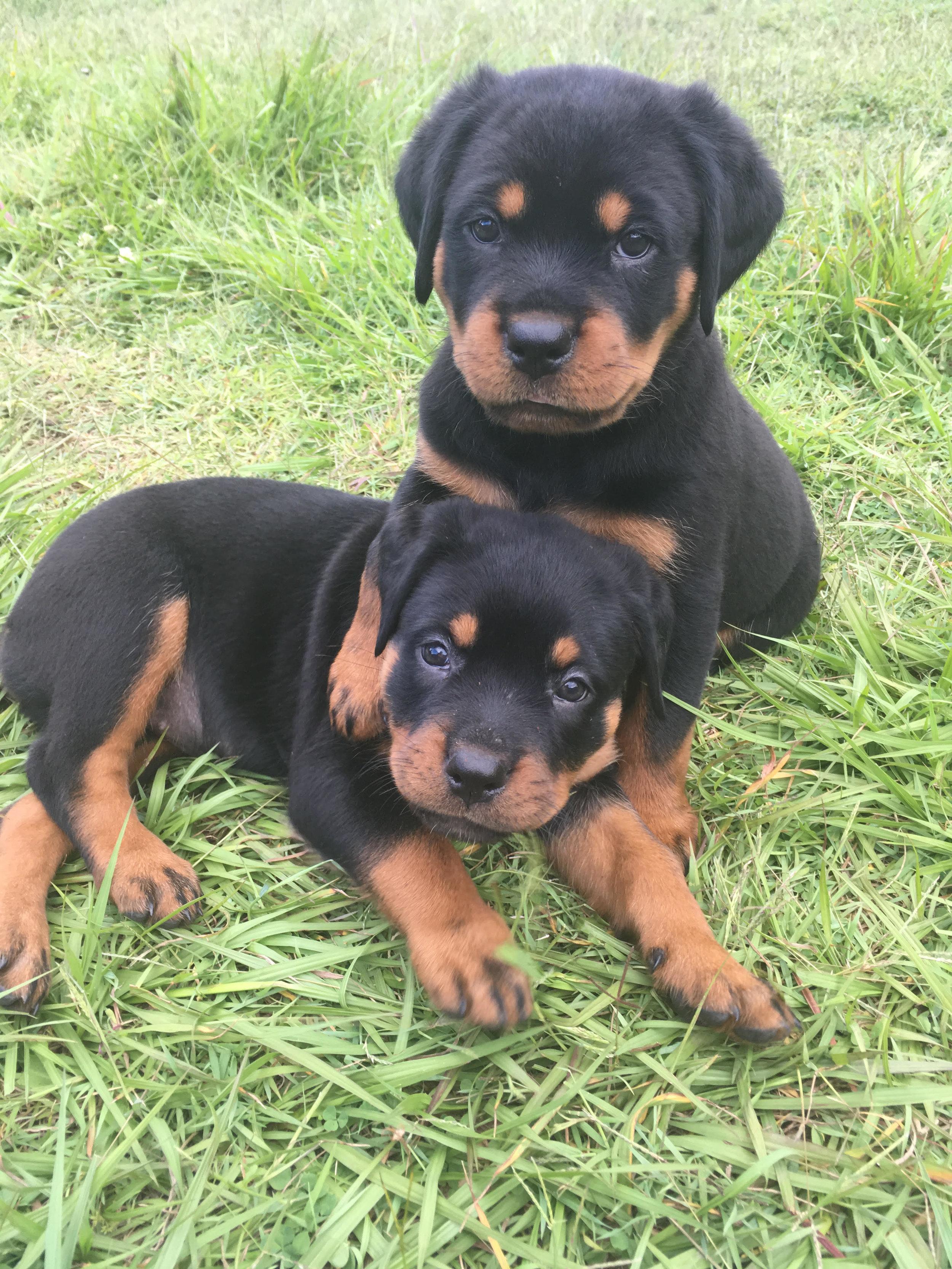 Athena Pups.jpg