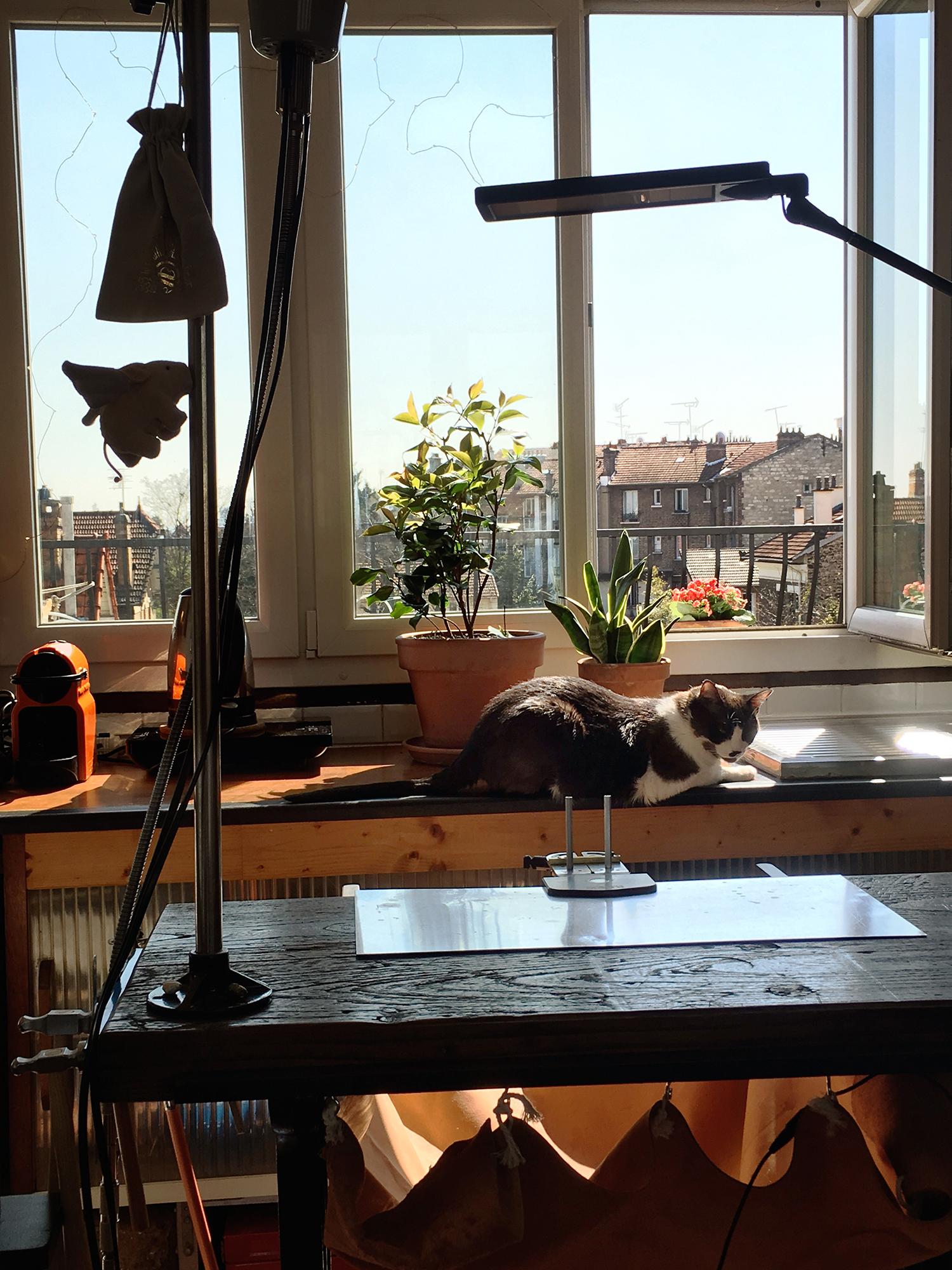 Un cochon volant et un chat bronzant