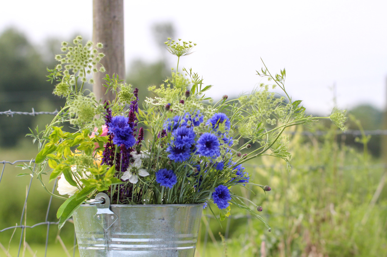 bucket with cornflowers nigella ammi majus.jpeg