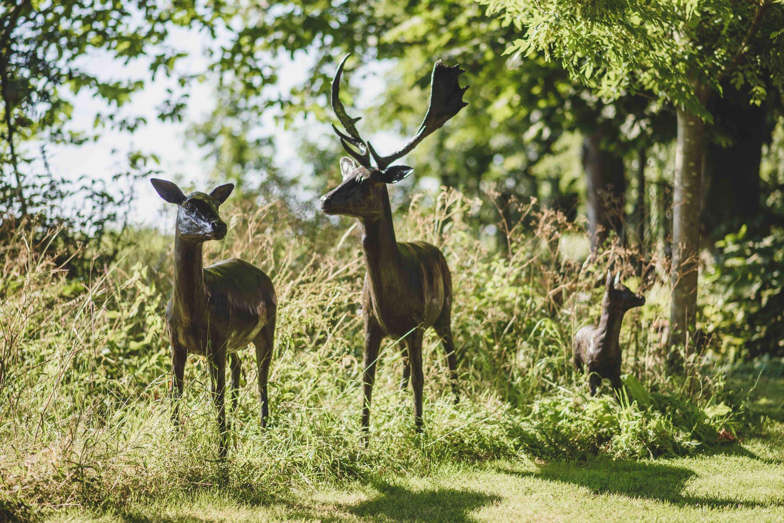 230 Deer 01.jpg
