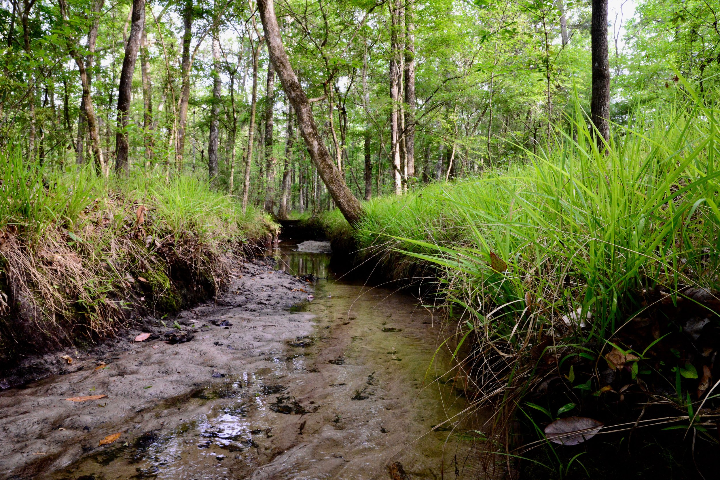 Together we can conserve, restore, and celebrate florida land -