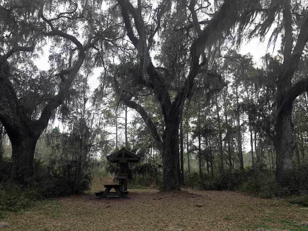 """Rochelle's Trio of Trees Witness To History"" - By Kristen Altus, March 7, 2019"