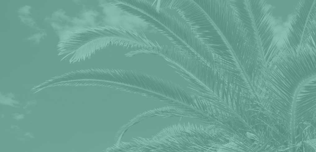 banner_background-palm.jpg