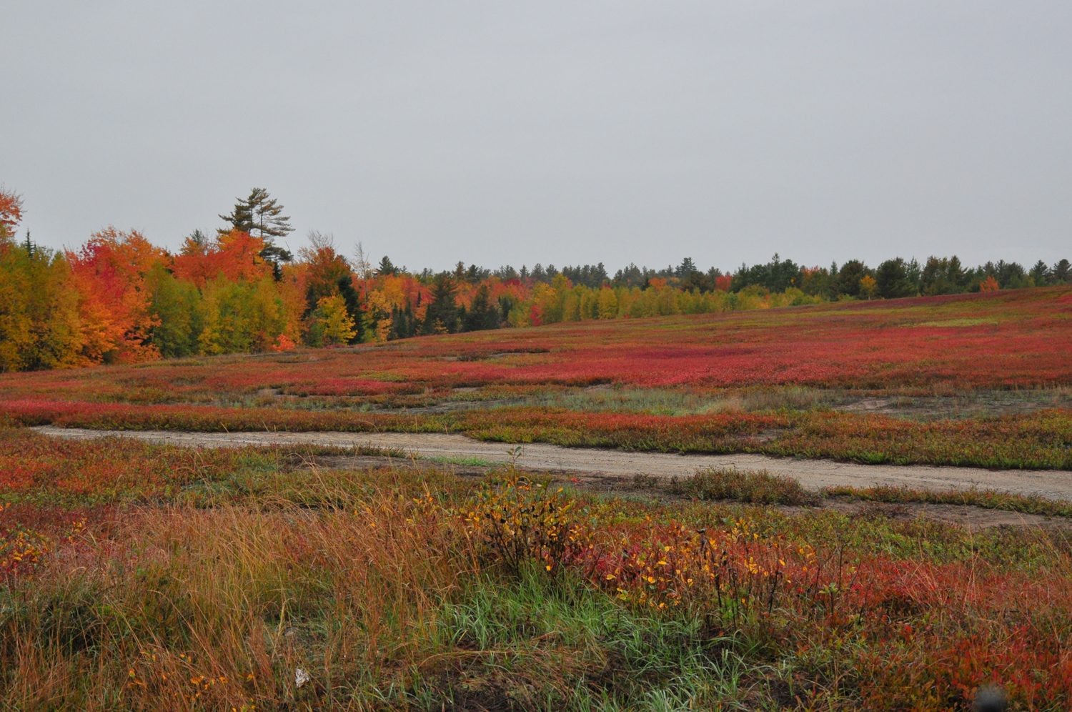 The wild blueberry barrens of Maine turn fiery red in fall, this alone was worth the trip long before we reached Lubec Maine.