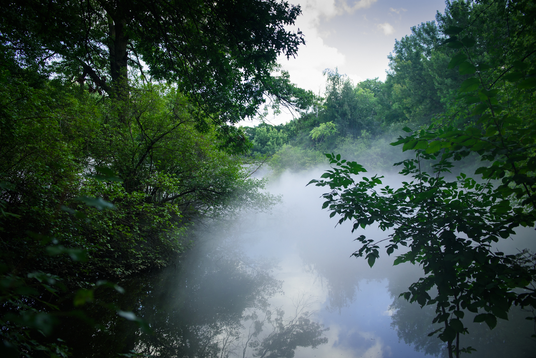 Fog x Island (#72509_Leverett Pond)