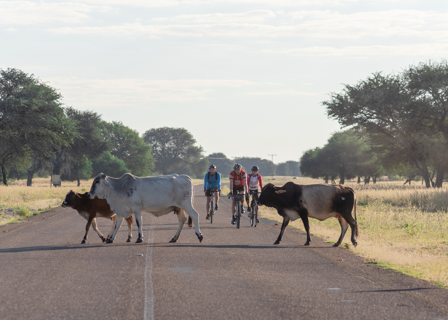 Cyclists interacted with livestock, seeing more donkeys, Brahman cattle, and horses as we progressed west towards Namibia. The herds wandered completely free through the bush, sometime with bells.