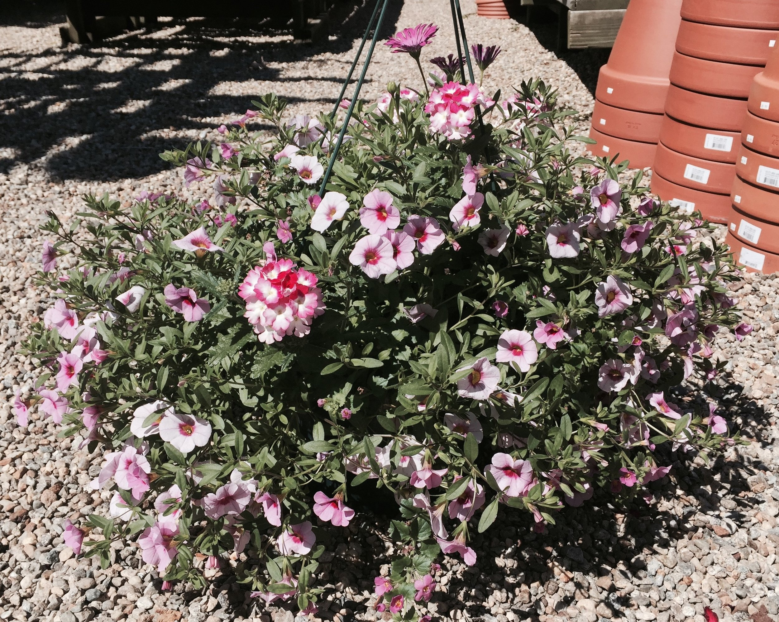 Choose from four planter styles in our  Spring Plant fundraiser !