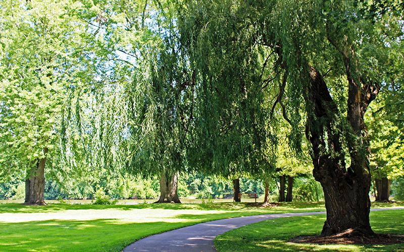 Riverside Park.jpg