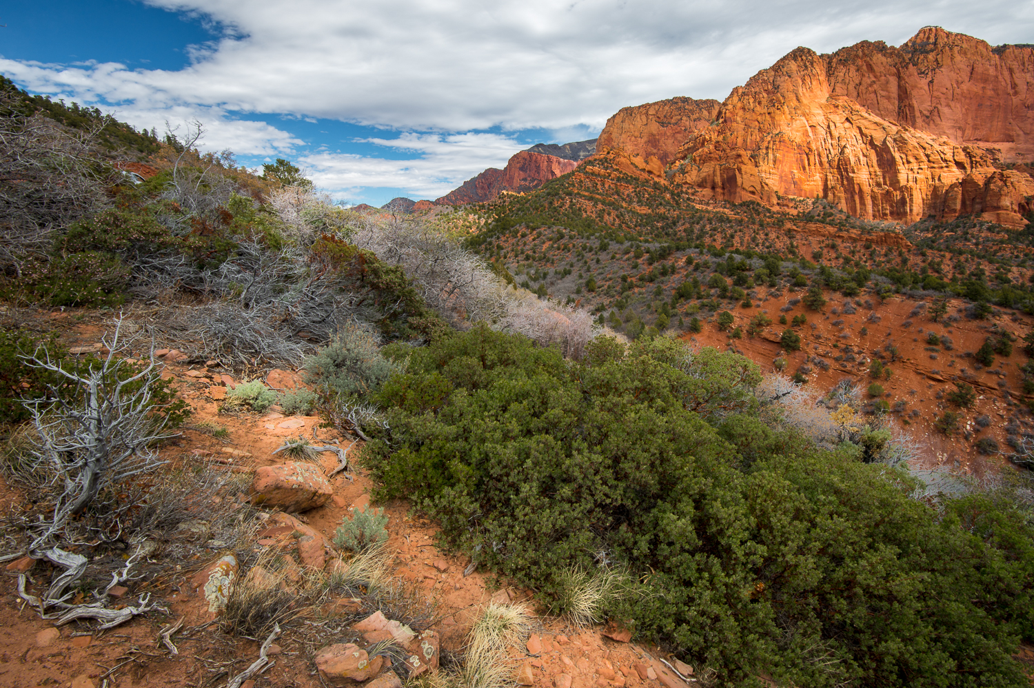Kolob Canyons Overlook