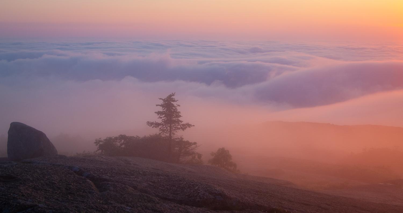 Sunrise in Fog