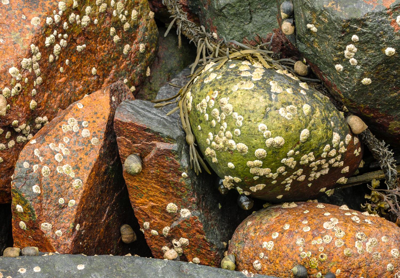 Cobbles and Snails
