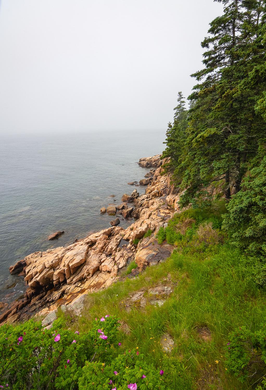 Otter Cliffs Flowers