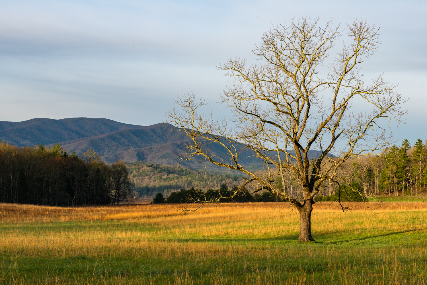 Tree and Fields