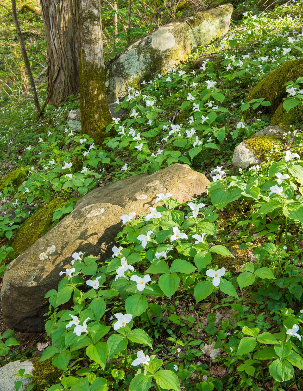 Elkmont Blooms
