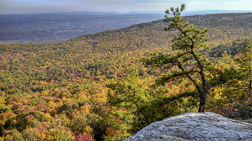 Beacon Hill Overlook