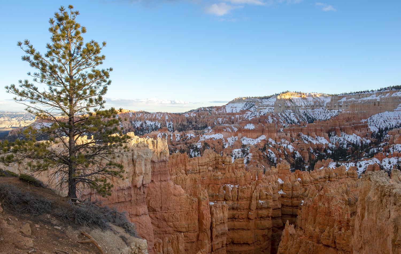Pine and Canyon
