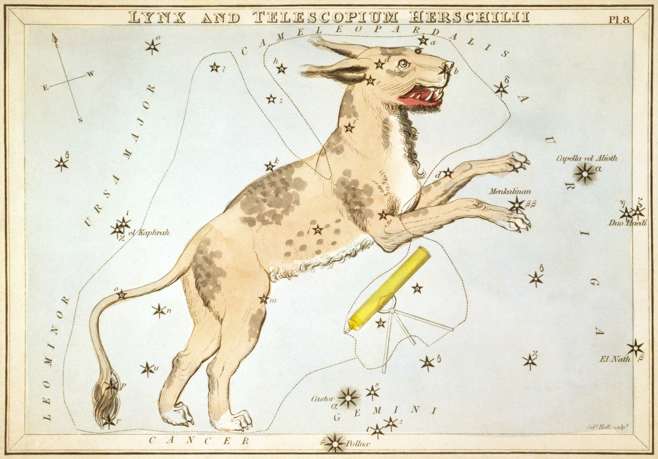 "Illustration from   Urania's Mirror  , a set of star charts engraved by  Sydney Hall  and published in 1824. Lynx was a constellation proposed in 1687 by Polish astronomer  Johannes Hevelius , and consisted of 19 stars spanning the gulf between  Ursa Major  and  Auriga . Hevelius named the constellation after a Lynx because it was so faint, and stated that only the ""lynx-eyed"" would be able to find it."