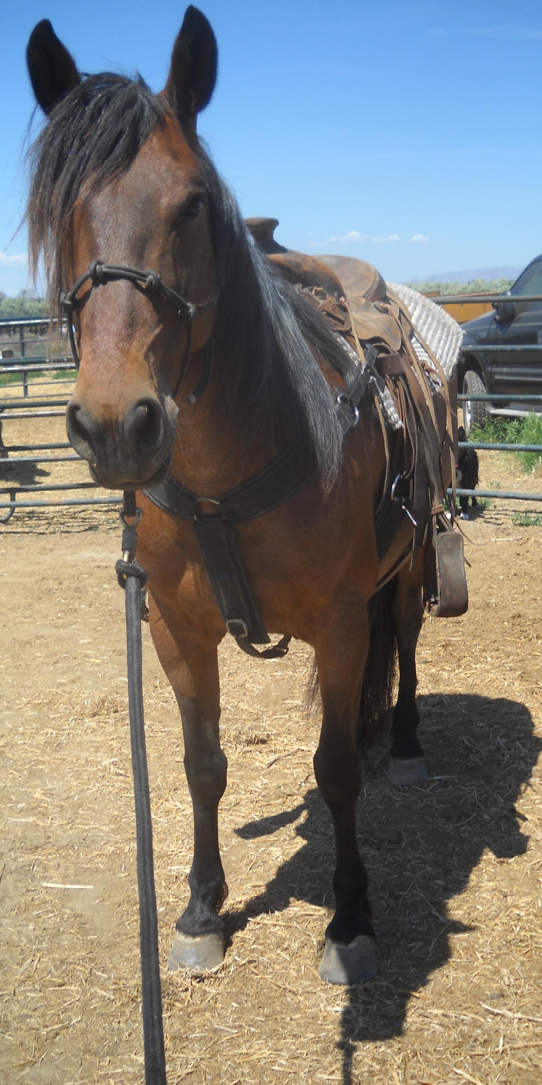 Antonia saddled.jpg