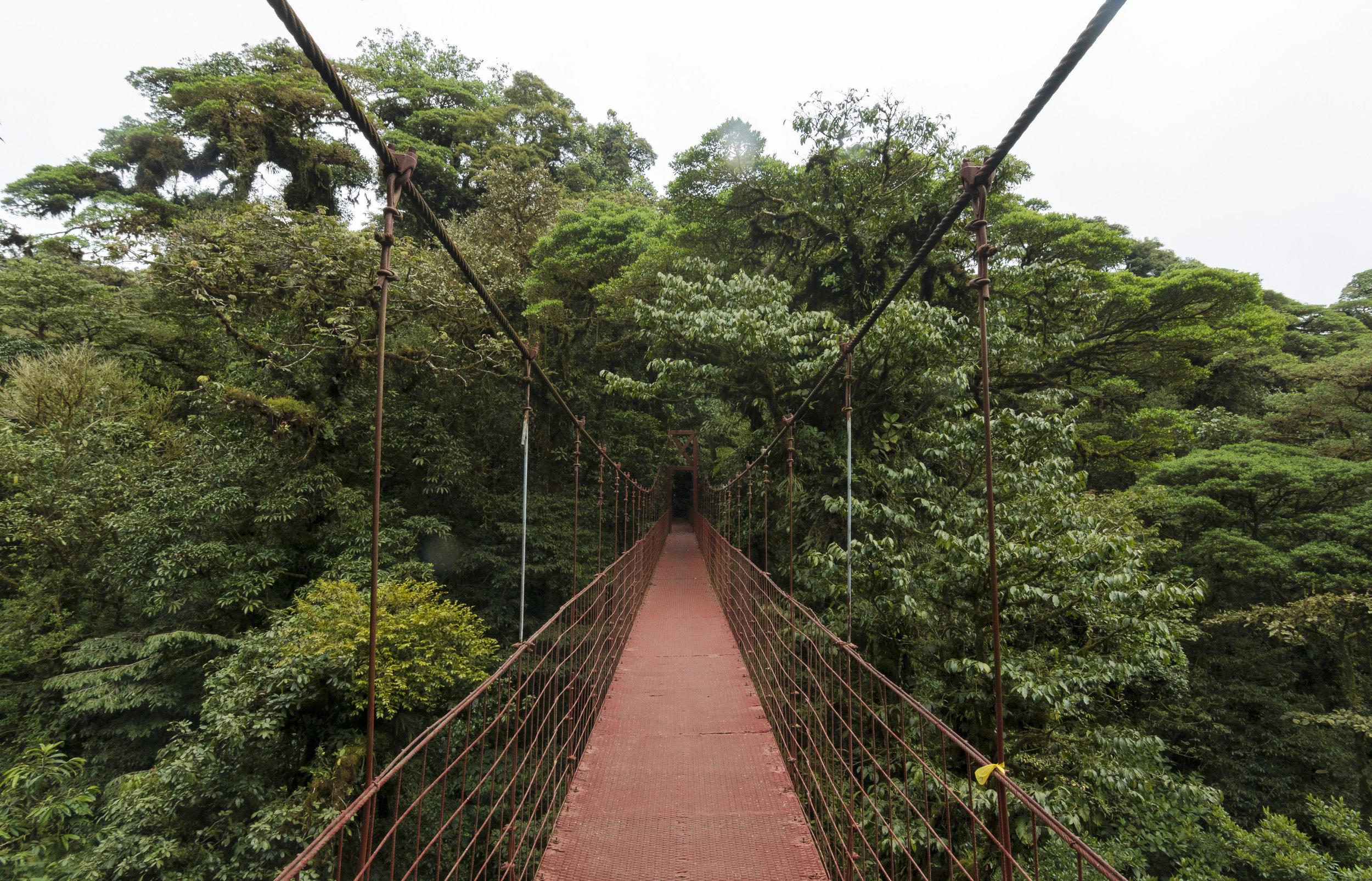 Monteverde Bridge Costa Rica.jpg