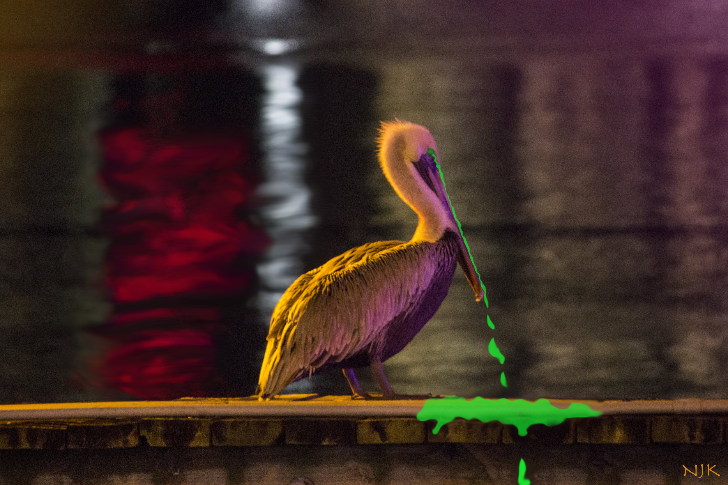 Pelican with graphic effect