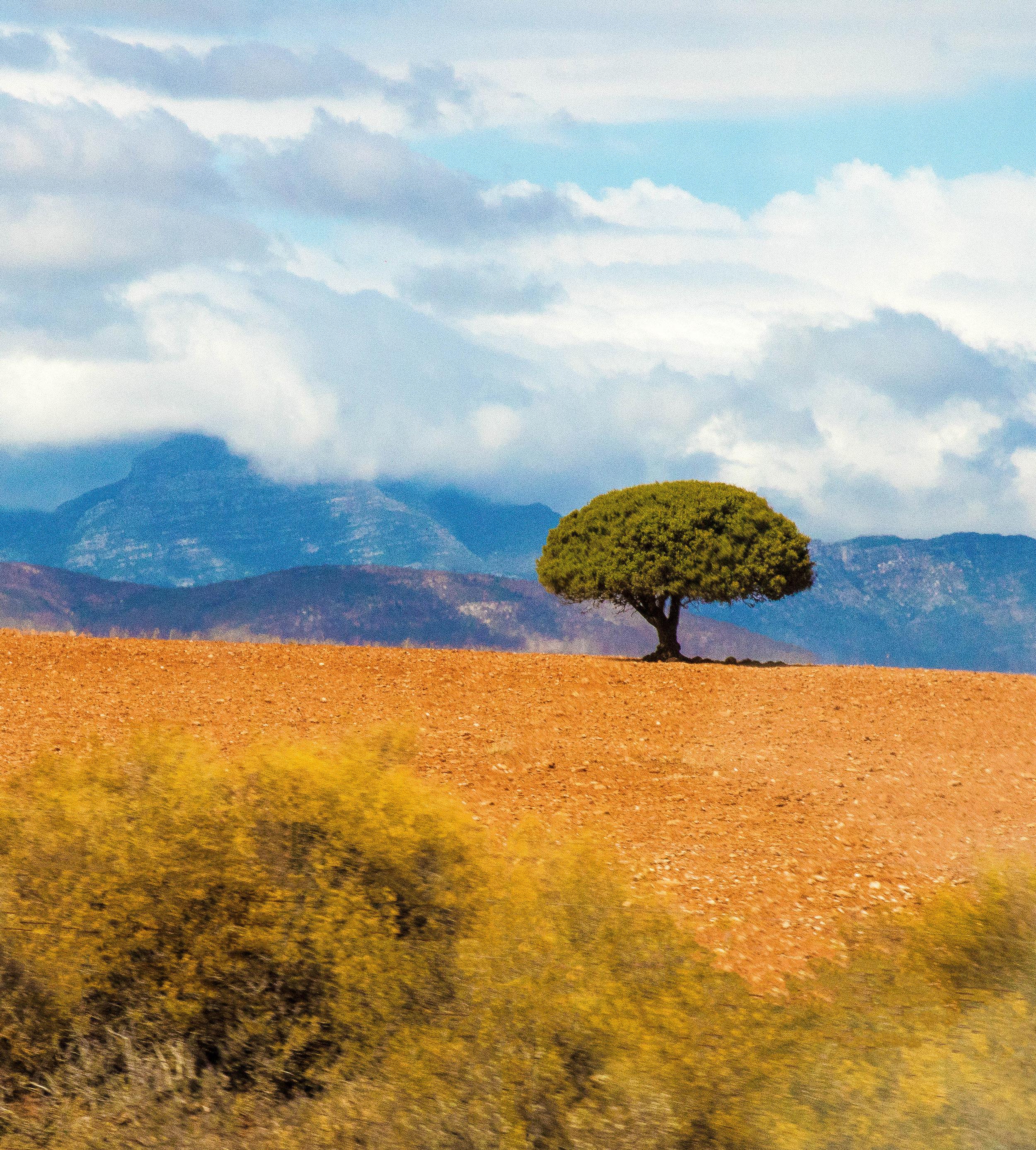 African Tree IG.jpg