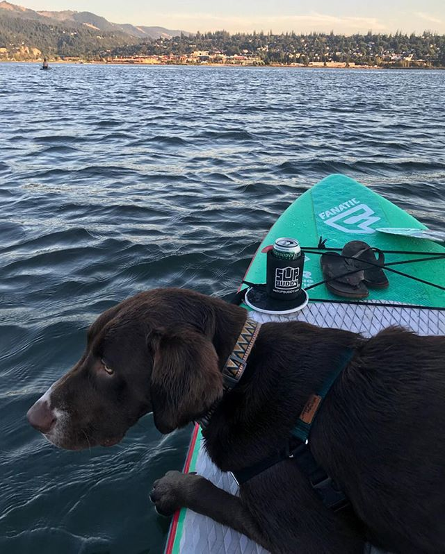 SUP Bud and @SUPBuddy on a sunset sesh... 🌅🌊🏄🏼♀️ this week's gonna be a hot one, be sure to keep your drinks cool and close at hand with #SUPBuddy! . . . #isup #supbuddy #oregon #standuppaddle #mansbestfriend #supsbestfriend #puppies #beer #pnwdogs #water #h2o #stoked #riverdays #summernights