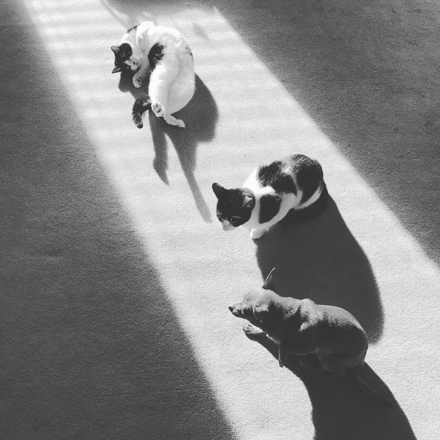 interpretive dance . . #cat #cats #chihuahua #dog #sunshine #pets