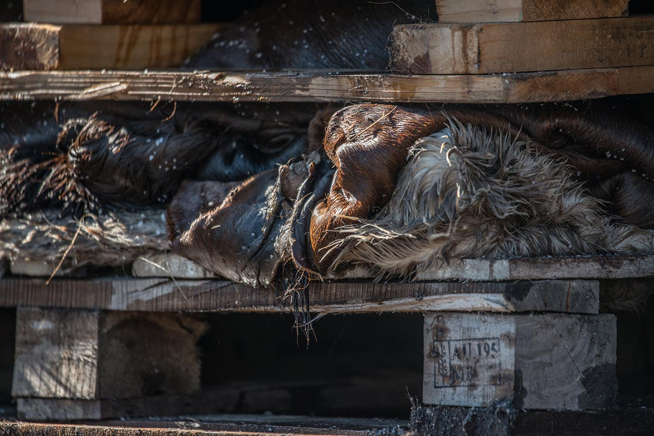 Cow skins stacked and salted on wooden pallets. Australia, 2017. Copyright  Jo-Anne McArthur / We Animals