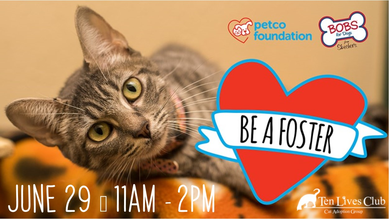 Petco Be a Foster Banner.jpg