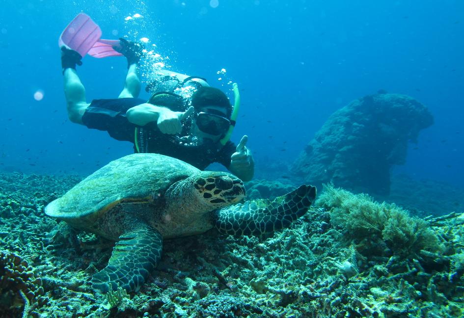 Sea Turtle & Americanus Doucheus
