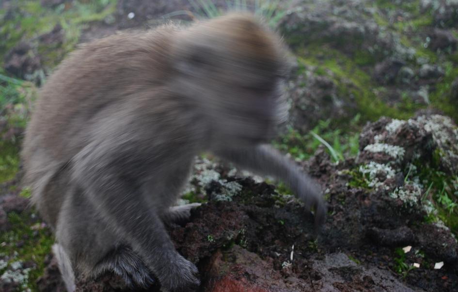 *Demon Monkey? Ever seen the film J acob's Ladder ?
