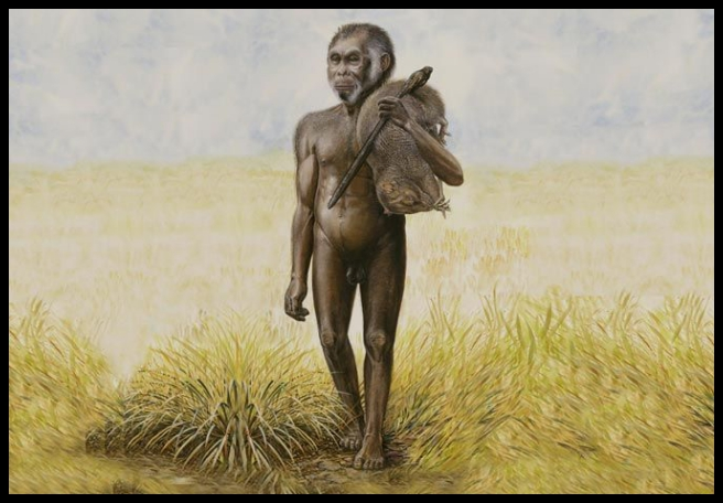 'Hobbit' human story gets a twist, thanks to thousands of rat bones - BY PAIGE MADISONPUBLISHED MARCH 12, 2019The limestone cave of Liang Bua, on the Indonesian island of Flores, is widely known as the hobbit cave, the site where the surprisingly tiny and enormously controversial extinct human relative Homo floresiensis was discovered….READ MORE