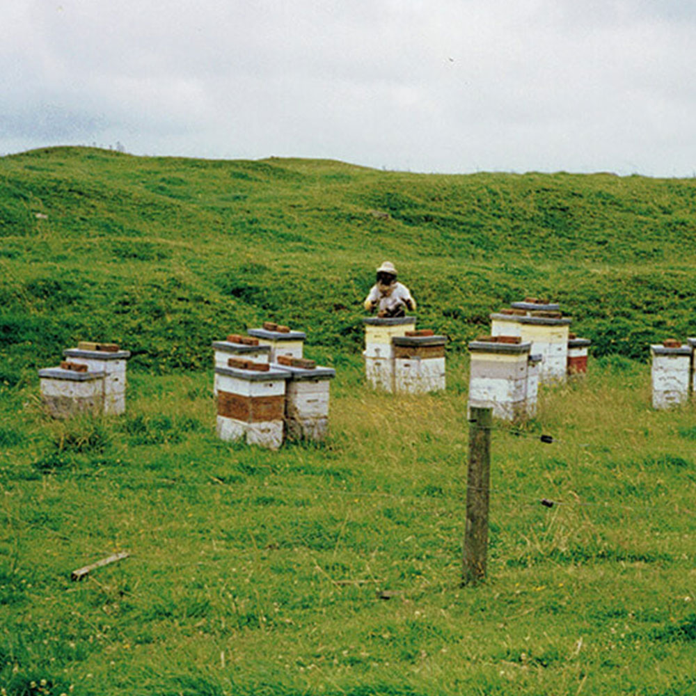 Bryon amongst the hives - 1999