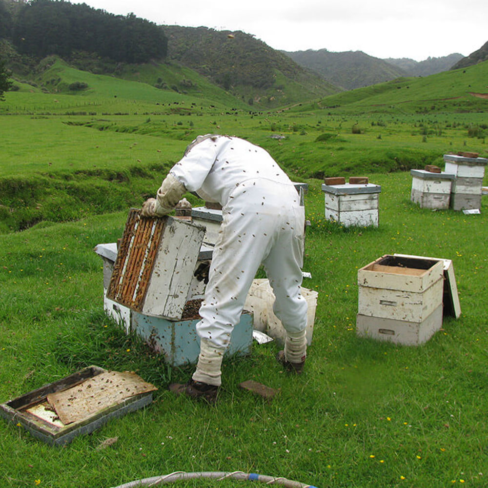 Bryon pulling a hive apart to check its wellbeing