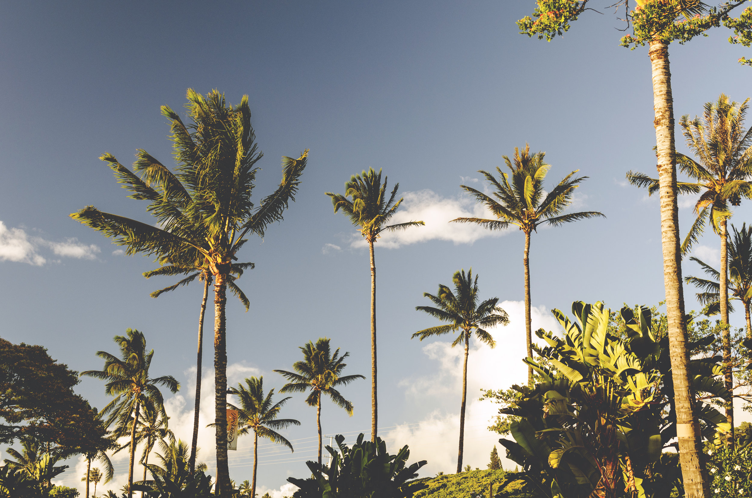 Hawaii006