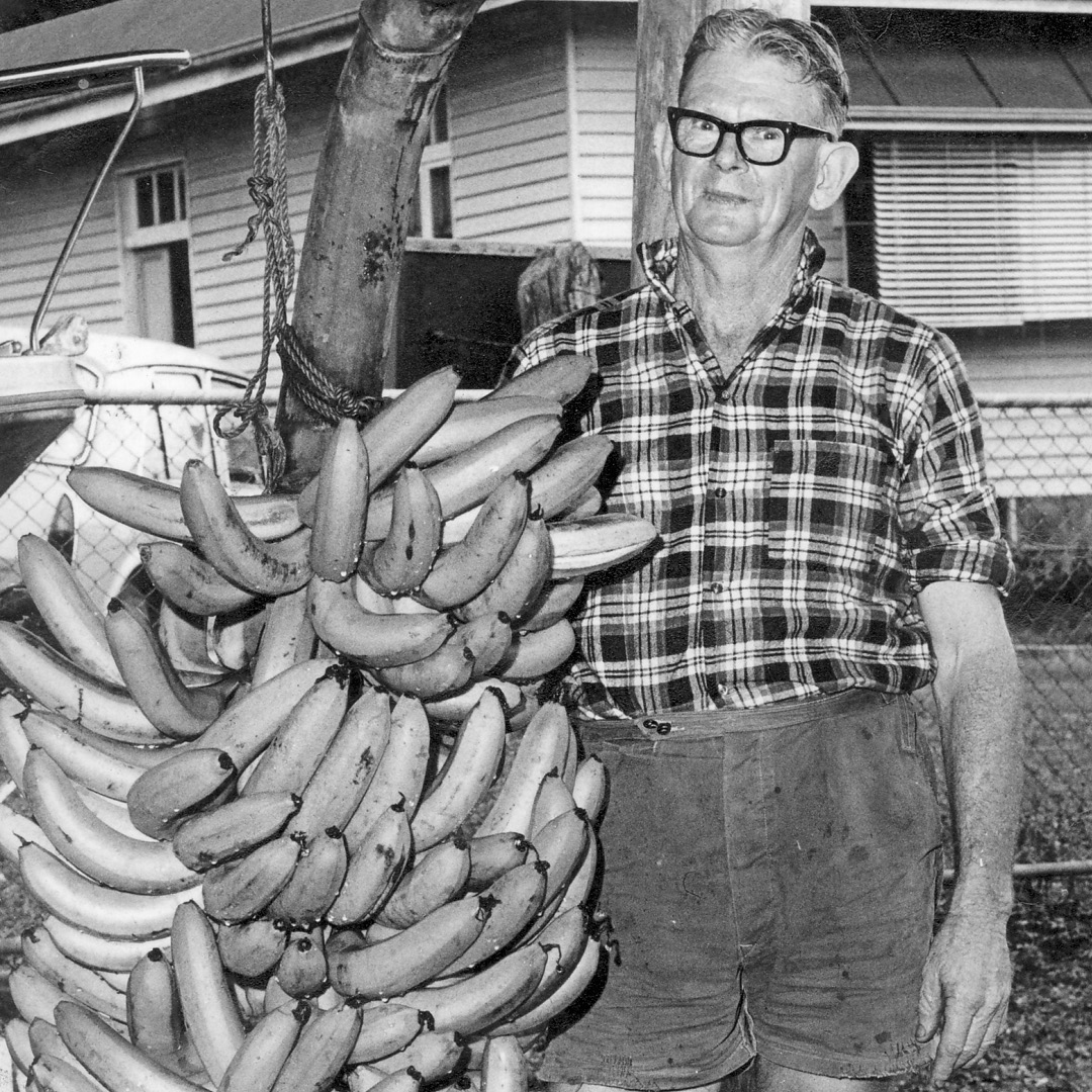 Stanley John MacKay with world record banana bunch weighing 198pounds, 1968