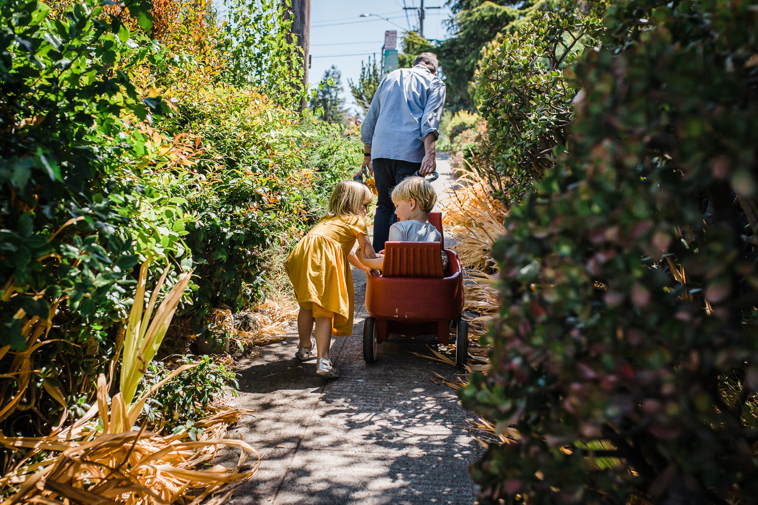a five year old boy being pulled by his father in a red wagon down a sidewalk with lots of vegetation while his three year old sister walks along beside him {East Bay Family Photography}