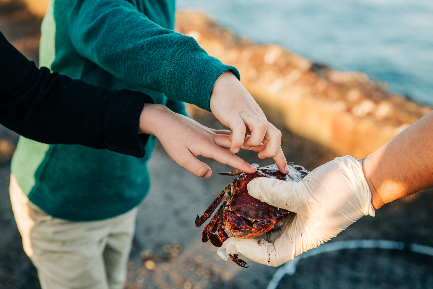 detail shot of a 4 year old boy and 6 years old girl touching a live crab at a pier | SF Lifestyle Photographer