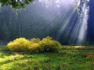 3f62d-rays-on-the-meadow.jpg