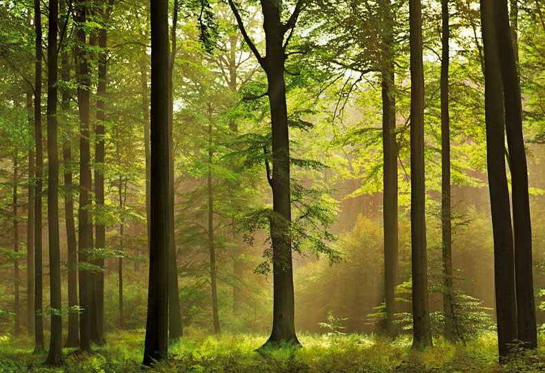 8f0df-autumn-forest.jpg
