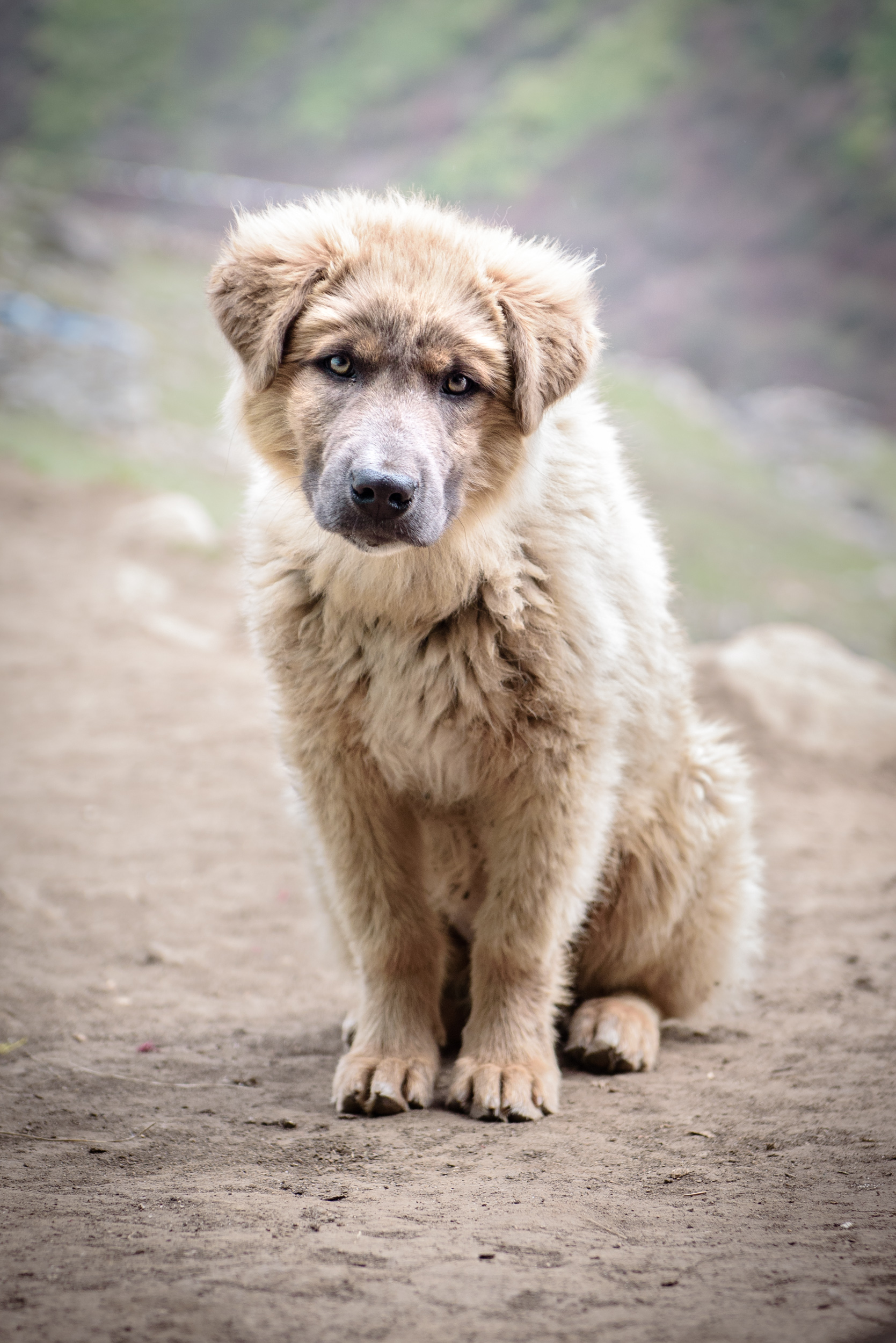 A Dokpa mutt. Most families no longer keep dogs at all.