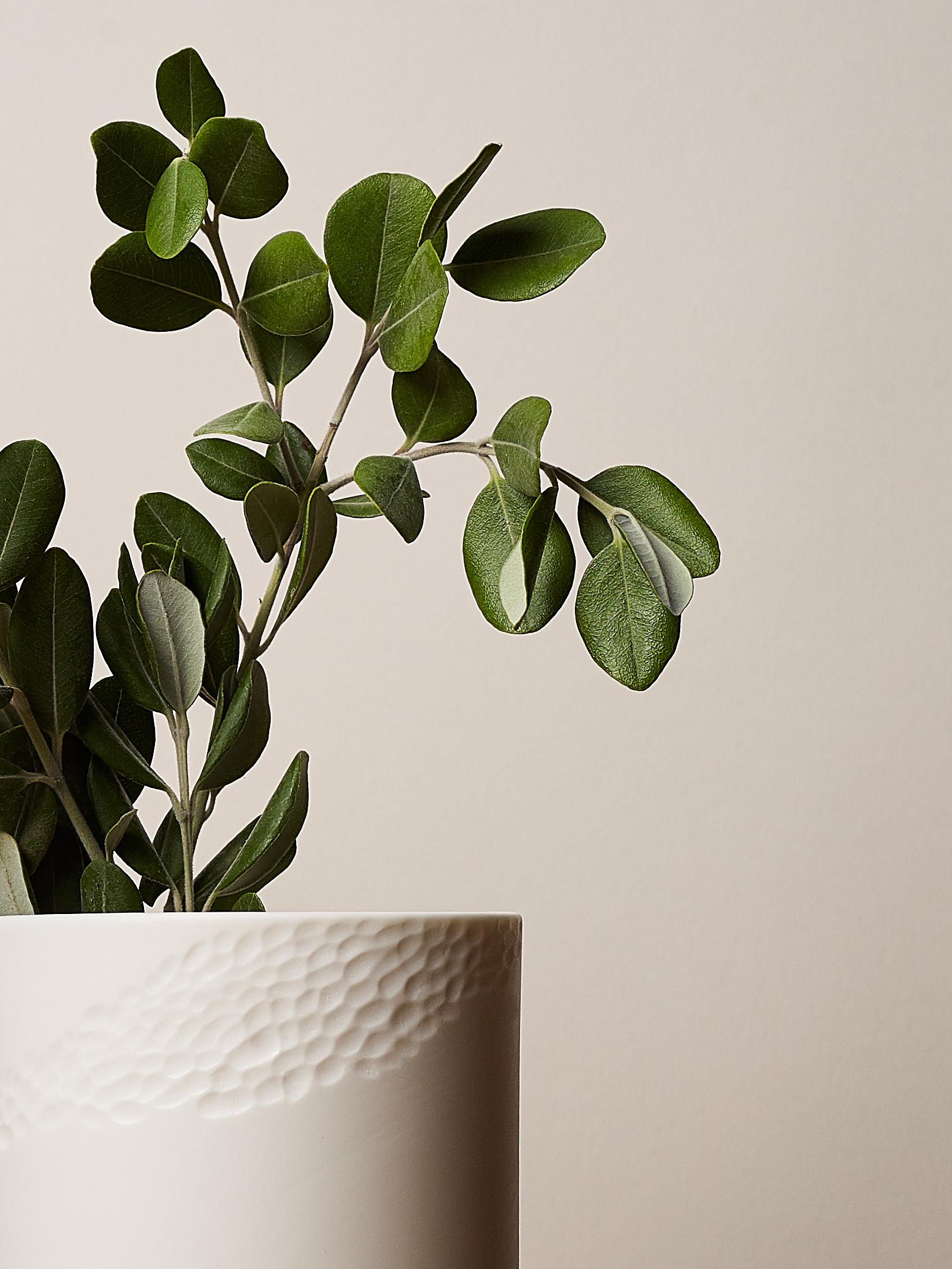 Sibling Vase Rye 7.jpg