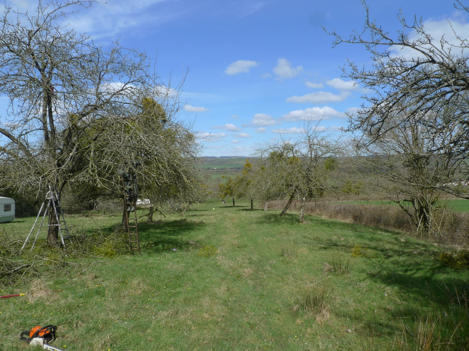 Spring Orchard  - Removing Mistletoe at this Orchard in West Pennard