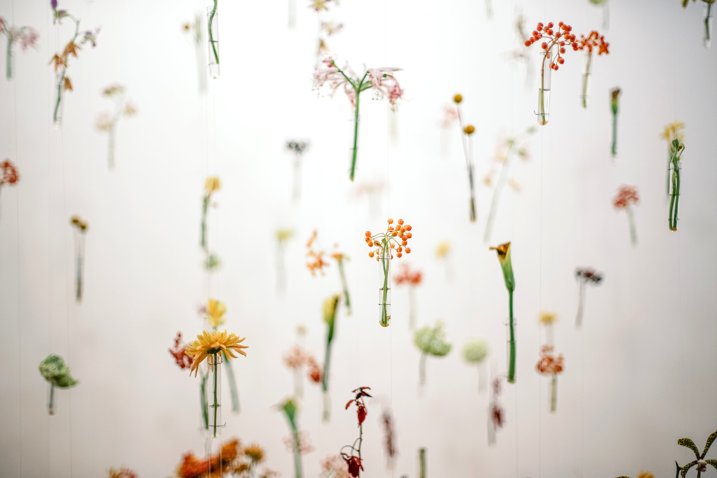 floating flowers.jpg