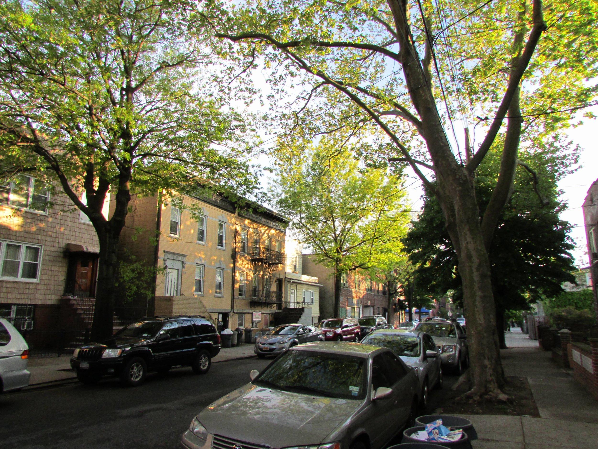 The suburban streets of Astoria, Queens