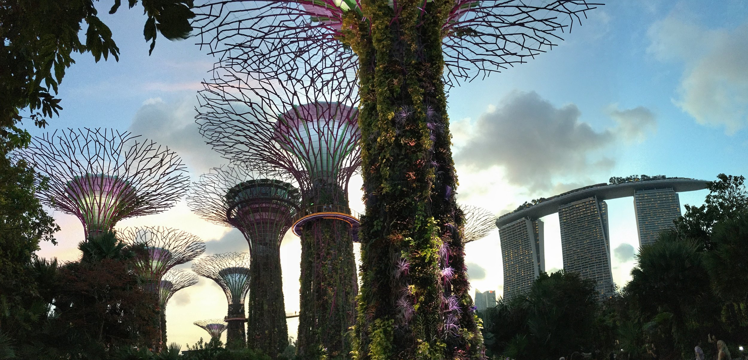 Super Trees And Marina Bay Sands, Singapore.jpg