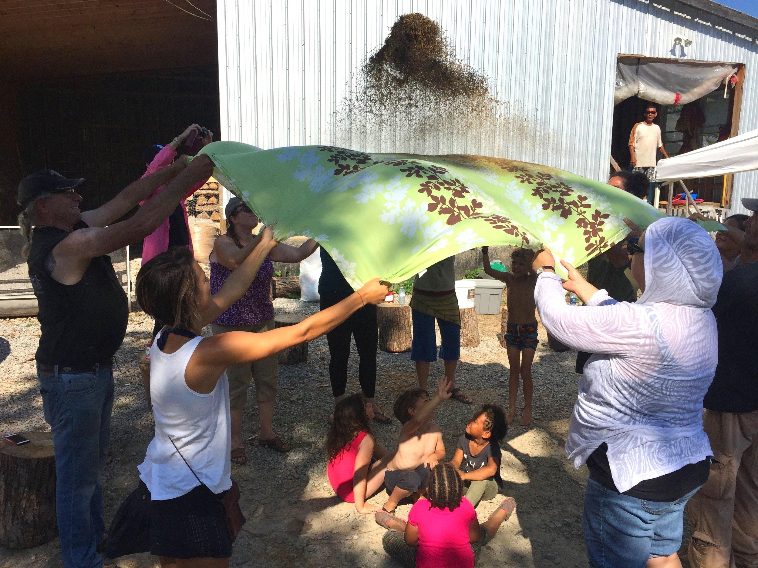 BLACK DUCK WILD RICE - Indigenous food sovereignty within the Kawartha Lake Region