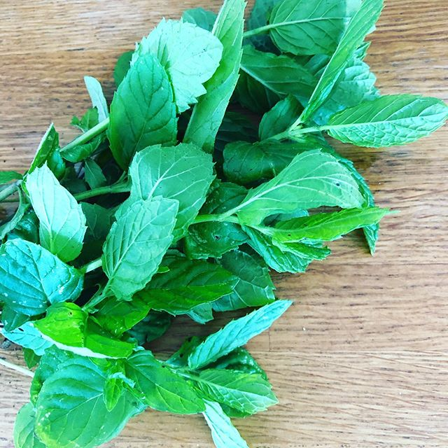 Fresh #mint from the garden. Will be making a watermelon, feta and mint salad for lunch... but given I'm a storyteller here it is. Minthe was a little nymph who had a thing for Hades (the God of the Underworld) - who hasn't been there - falling for the wrong person. Anyway, Persephone (the wife Hades kidnapped) had by this point made peace and was not amused by Minthe and so turned her into a plant and crushed her. The thing is that minthe smelt so sweet she released a fragrant smell the more people stepped on her. So Mint is the herb that comforts those who have lost with a hidden message that says 'love me again'. #gardenmythology #healingheartache