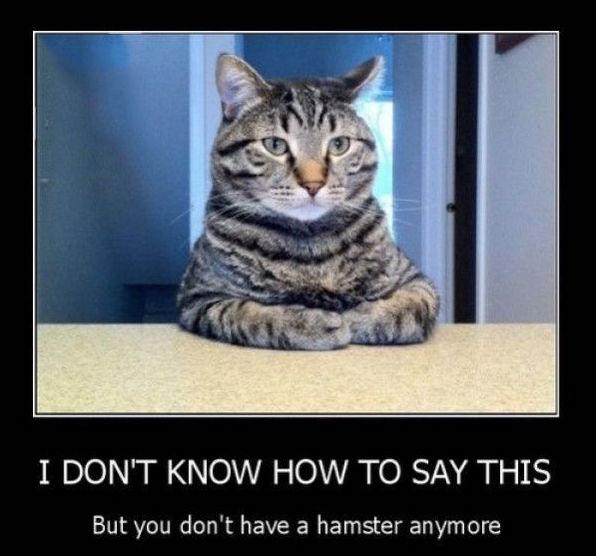 cat hamster.jpg