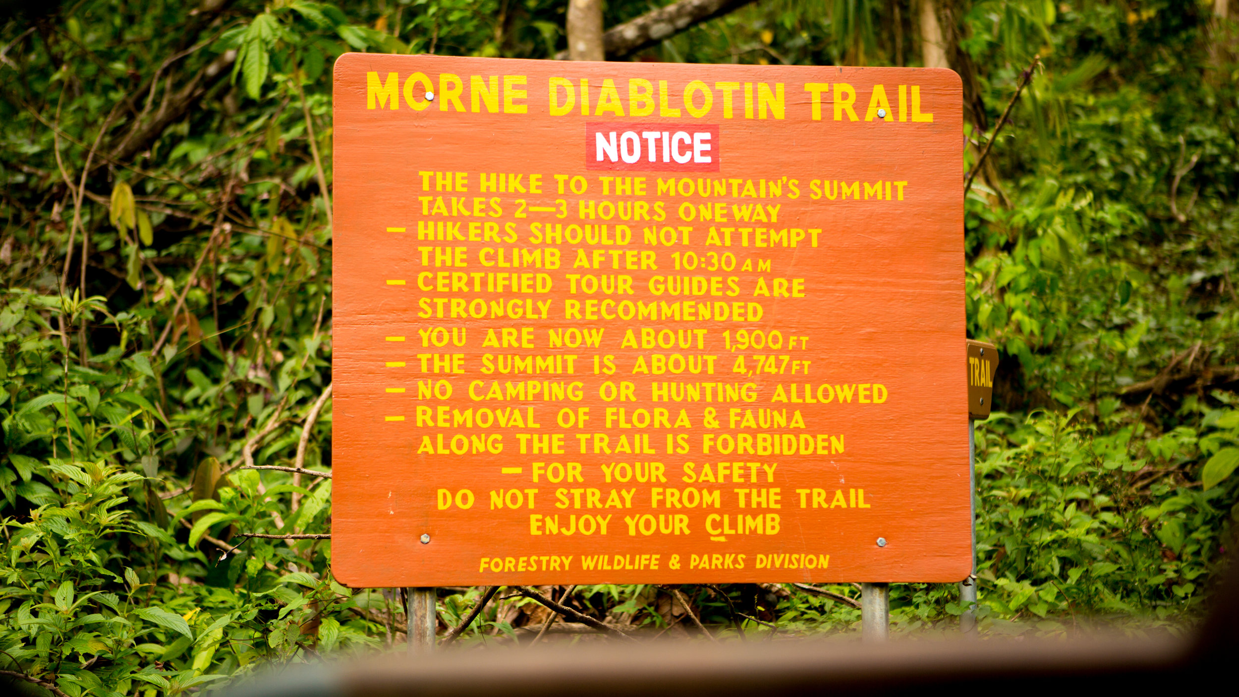 Morne Diablotin Trail…Land Of The Little Devils: The most fertile land on Dominica!
